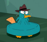 Cheese Loving Perry