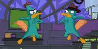 A Platypus Fight