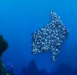 File:Moonfish Aarow.jpg
