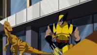 Wolverine raptors