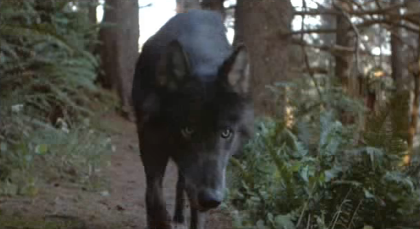 File:Timber Wolf 13.png