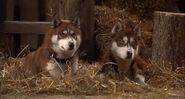 Snow-dogs-disneyscreencaps.com-4697