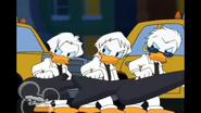 Quackstreet Boys stop to glare