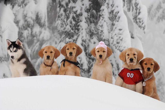 File:Snow-Buddies-the-snow-buddies-club-31198314-960-643.jpg