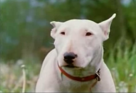 bull terrier movie category the incredible journey characters disney wiki 3407