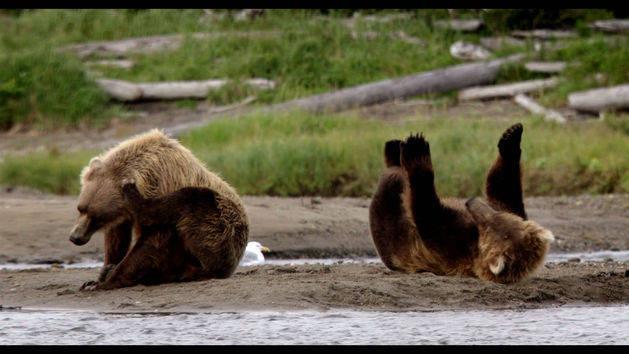 File:Disneynature-bears-3.jpg