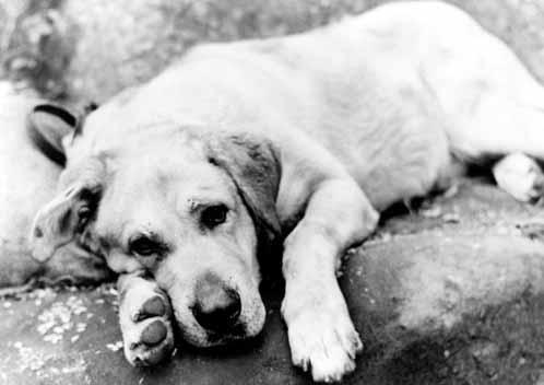 File:Old Yeller pic. 44.jpg