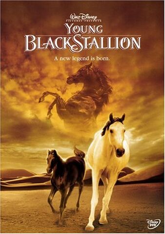 File:Young Black Stallion.jpg