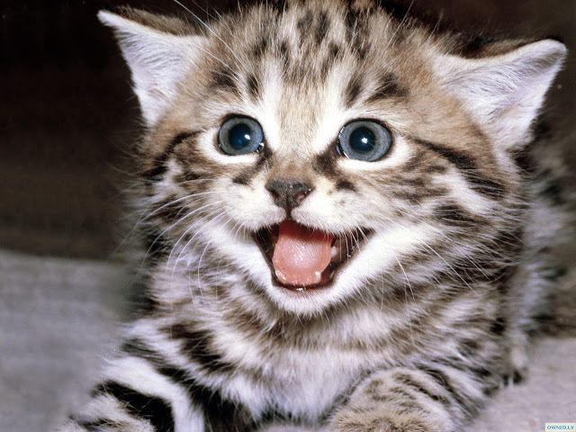 File:Cute-Cat.jpg