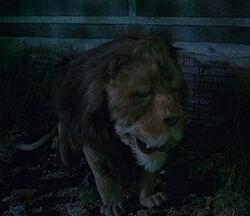 Cowardly Lion Return to Oz