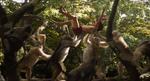 Jungle Book 2016 70