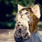 File:Kittensrock in wonderland.jpg