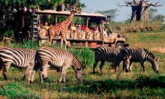 File:Kilimanjaro Safaris.jpg