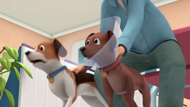 File:Two dogs barking.jpg