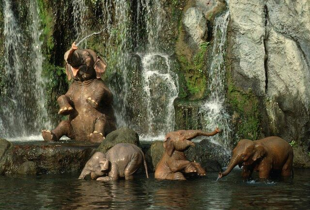 File:Jungle cruise elephants.jpg
