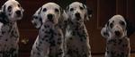 Dalmatian-Puppies-1996-1