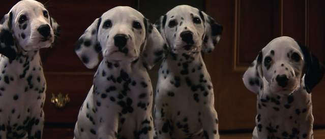 File:Dalmatian-Puppies-1996-1.png