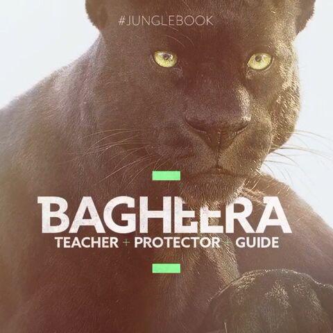 File:Bagheera Vine Poster.jpeg