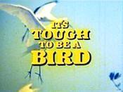 Tough bird 1