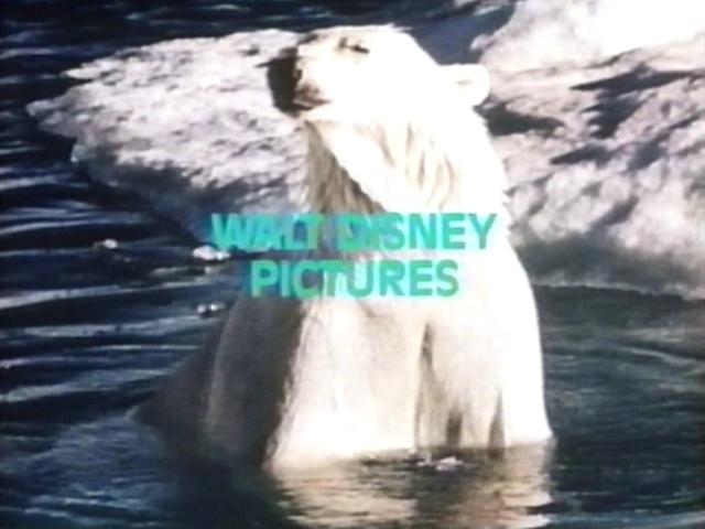 File:Track snow bear 3.jpg