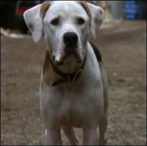 Chance Shadow Dog Movie