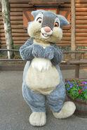 Latest Thumper