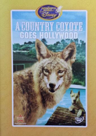 File:1965-coyote-7.jpg