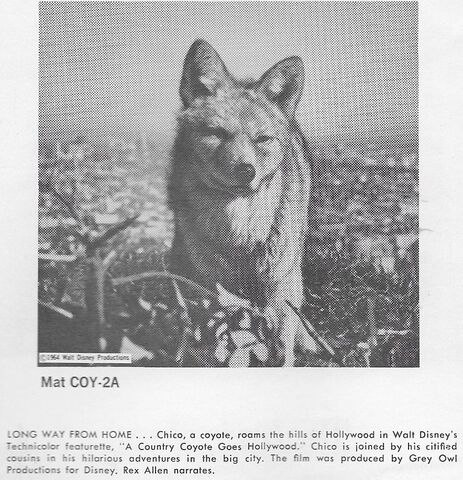 File:A Country Coyote Goes Hollywood print ad 3.jpg