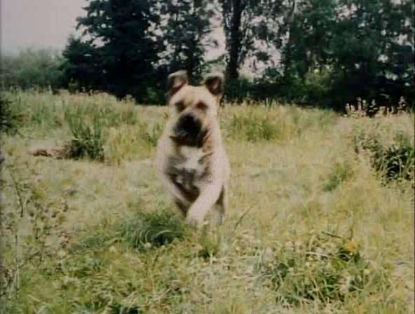 File:Friartuckdog.png