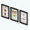Market - Entomology