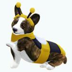 PetsCostumes - Bailey Bee