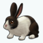 Pets - Rabbit Clover