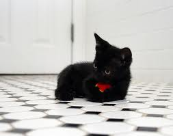 File:My cute kitten 2.jpg