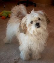 Sandy The Dog