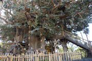 Swiss Family Treehouse (TDL)