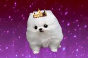 Queen Fluffy 2