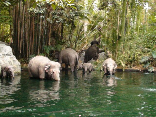 File:Jungle Cruise Elephants.jpg
