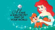 Shelter Pet Project Princess