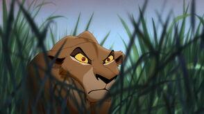 Simbas pride 0837