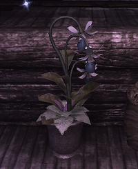 Oak Tears (D2 herb)
