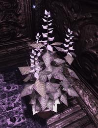 Holy Basil (D2 herb)