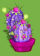 Dizzywood potted cactoberry