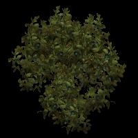 Ob bush14.jpg