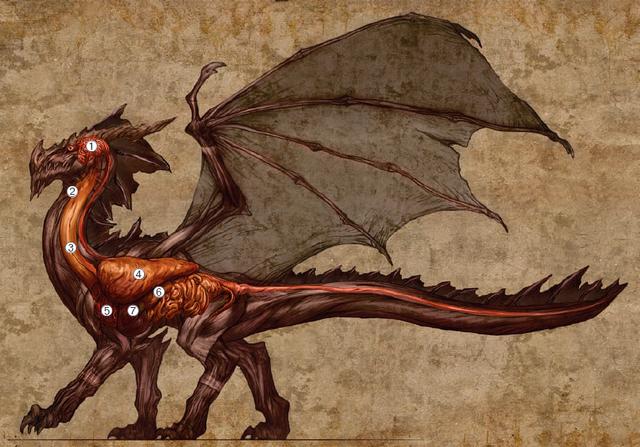 File:Dragon Organs.png