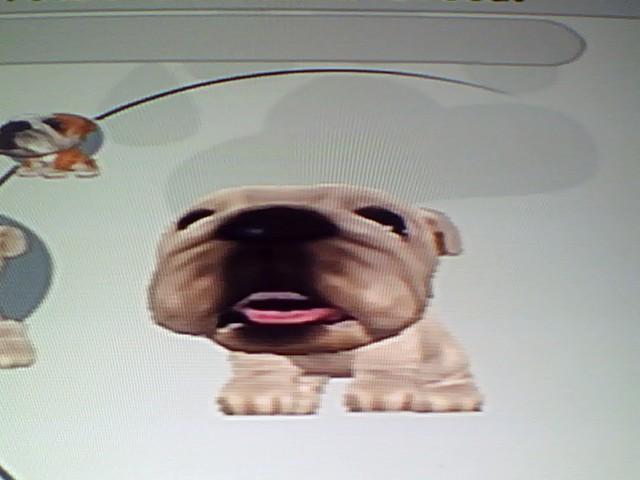 File:13 White Bulldog.jpg