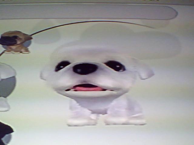 File:41 White Pekingese.jpg