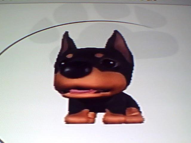 File:20 Black Doberman.jpg