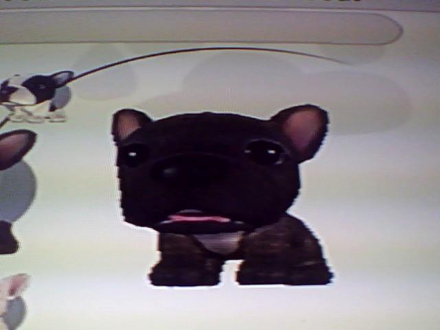 File:36 Black French Bulldog.jpg
