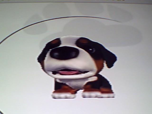 File:40 Bernese Mountain Dog.jpg