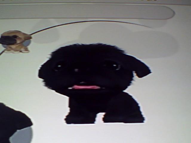 File:41 Black Pikengese.jpg